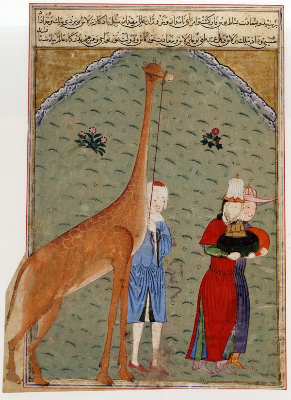 Giraffe or Camel