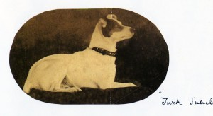 Turk Sahib as a British dog